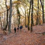 Pasear por los bosques otoñales de la Sierra Norte de Madrid