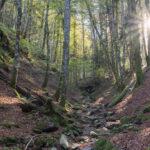 6 rincones mágicos en otoño para descubrir con tu caravana